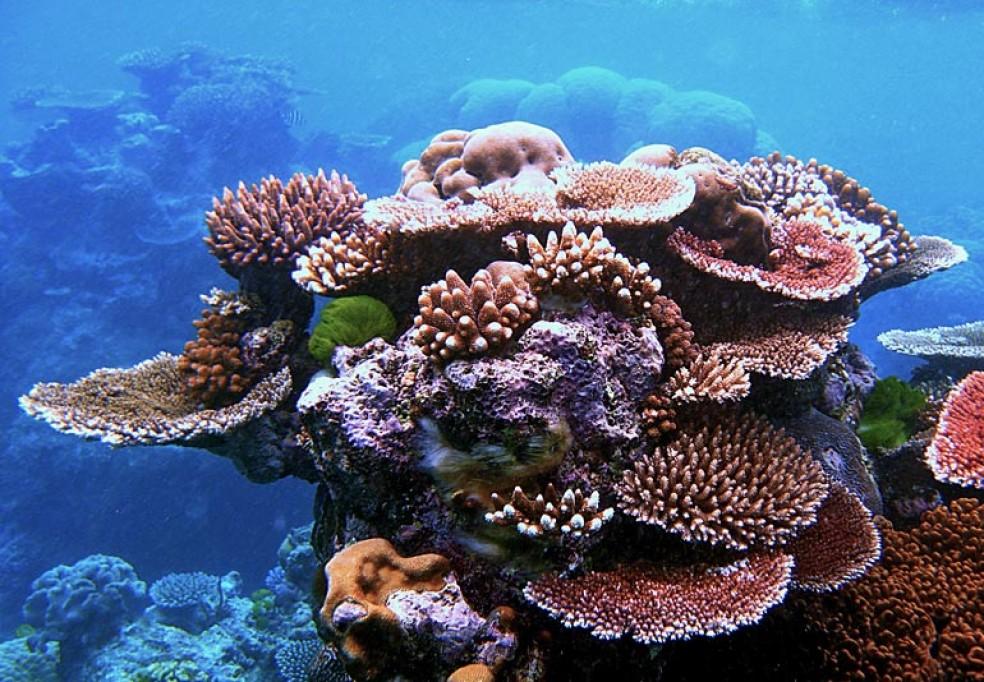 Plano de Gestão para a Área de Conservação no Arquipélago de Nampula e Zambézia em Moçambique
