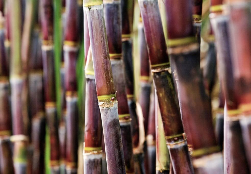 Produção de Bioetanol para Alimentação