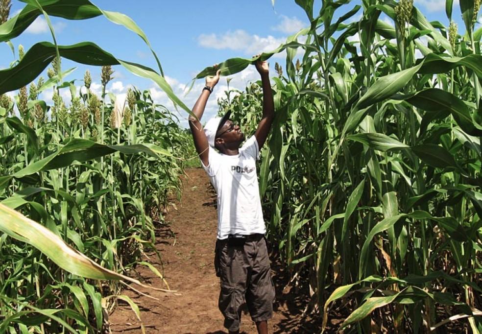 Produção e Distribuição de Bio Energia na Província de Cabo Delgado