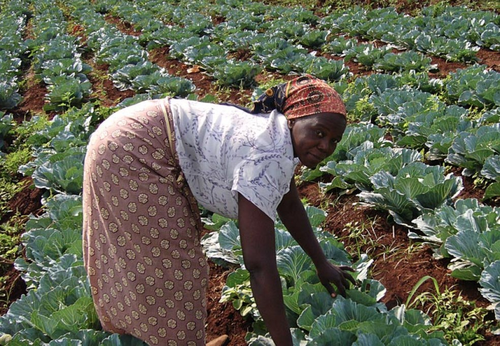 Green Revolution: National Agriculture Mechanization Strategy