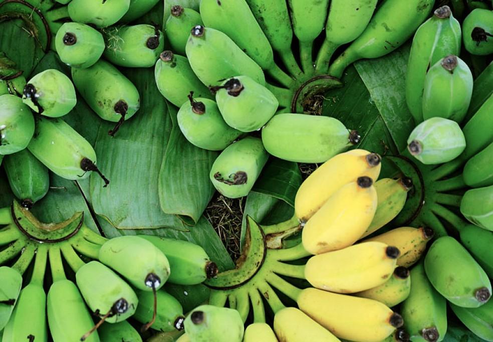 Projeto ENICA – Desenvolvimento de Agro-Indústria, com Foco na Produção, Embalagem e Exportação de Banana, Chiúre – Província de Cabo Delgado