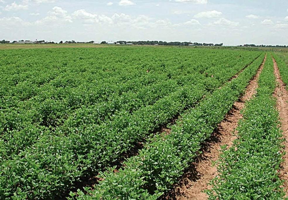 Preparação do Apoio ao Desafio do Milénio a Projectos Ambientais e Sociais no Norte de Moçambique