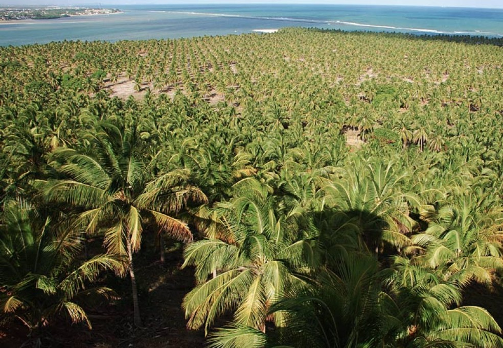 Impact of the Lethal Yellowing Disease of the Coconut Tree in Zambézia and South of Nampula